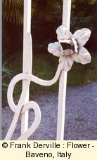 Art Nouveau flower in Baveno