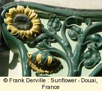 Art Nouveau sunflower in Douai